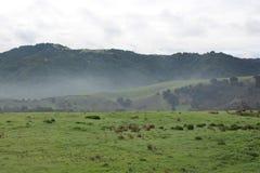 Nebeliger Hügel Lizenzfreies Stockfoto