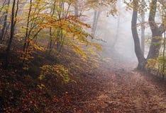 Nebeliger Herbst-Wald lizenzfreies stockbild