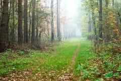 Nebeliger Herbstpfad stockfotografie