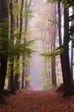 Nebeliger Herbstpfad Lizenzfreie Stockfotografie