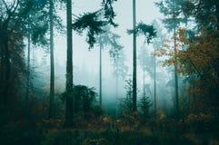 Nebeliger Herbsttag in einem schön atmosphärischen Wald lizenzfreies stockfoto