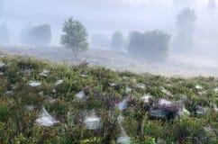 Nebeliger Morgen über Hügeln mit Heide und Blaubeeren stockfoto