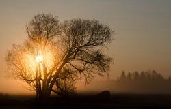 Nebeliger Morgen Stockbild