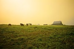 Nebeliger Morgen auf dem Bauernhof Stockbilder