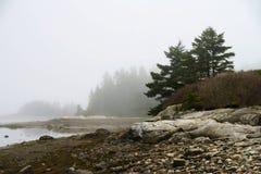 Nebeliger Morgen auf der Seeküste Stockbilder