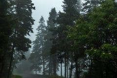 Nebeliger Morgen auf Schoodic Lizenzfreies Stockbild
