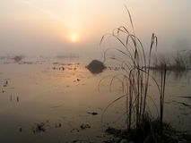 Nebeliger Morgen auf Tulchinskom See. Stockfotos