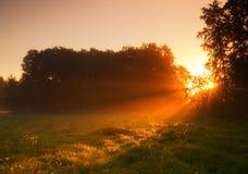 Nebeliger Morgen auf Wiese. Sonnenaufganglandschaft. Lizenzfreie Stockfotos