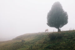 Nebeliger Morgen in der Hochebene Alpe di Siusi Lizenzfreies Stockbild