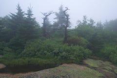 Nebeliger Morgen an der Spitze Cadillac-Berges in Maine mit Lizenzfreie Stockbilder