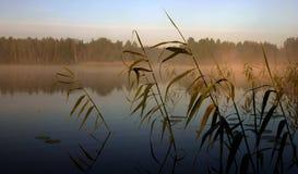 Nebeliger Morgen durch den See, III lizenzfreies stockbild
