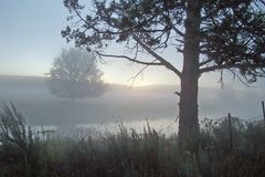 Nebeliger Morgen entlang verlorenem Fluss. Stockfotos