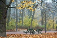 Nebeliger Morgen im Herbstpark Stockfoto