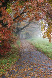 Nebeliger Morgen im Park, Herbst Stockfoto