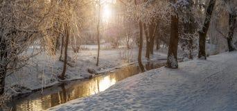 Nebeliger Morgen im Stadtpark Stockfotografie