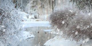Nebeliger Morgen im Stadtpark Stockfotos