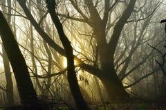 Nebeliger Morgen im Wald Stockbild