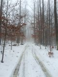 Nebeliger Morgen im Wald Lizenzfreies Stockfoto