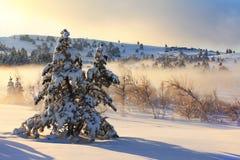 Nebeliger Morgen im Winter Stockbilder