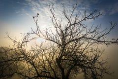 Nebeliger Morgen mit einem Baum Stockbild