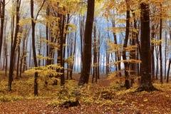 Nebeliger mystischer Wald Lizenzfreie Stockfotos