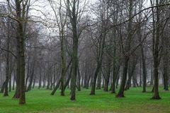 Nebeliger Park Stockfotografie