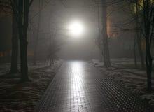 Nebeliger Park nachts Stockfotografie