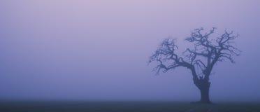 Nebeliger Schattenbildbaum Stockbilder