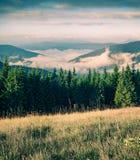 Nebeliger Sommermorgen in den Karpatenbergen Malerische Szene im Freien auf dem Gebirgstal im Juni, Ukraine, Tatariv-Landhaus lizenzfreie stockfotos