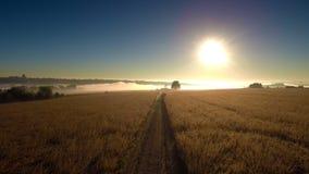 Nebeliger Sonnenaufgang über dem Feldweg stock footage