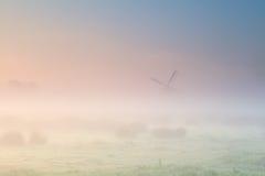 Nebeliger Sonnenaufgang über niederländischem Ackerland mit Windmühle Stockfotografie