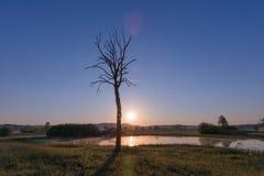 Nebeliger Sonnenaufgang über See, blattlosem Baum und Naturreservat im Ohr stockbild