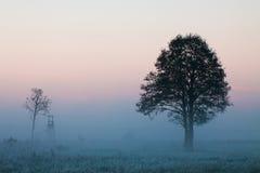 Nebeliger Sonnenaufgang Stockfoto