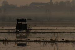 Nebeliger Sonnenaufgang im Sumpfgebiet über den Sümpfen stockbilder