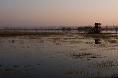 Nebeliger Sonnenaufgang im Sumpfgebiet über den Sümpfen lizenzfreie stockbilder
