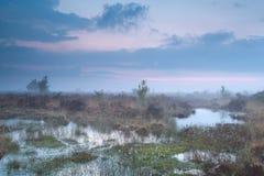 Nebeliger Sonnenuntergang über Sumpf mit Wollgras Stockbilder