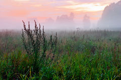 Nebeliger Sonnenuntergang auf dem Sommergebiet Lizenzfreie Stockfotografie