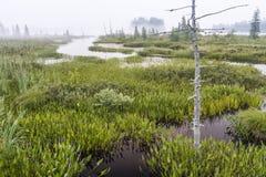 Nebeliger Sumpf vor Raquette See Lizenzfreies Stockfoto