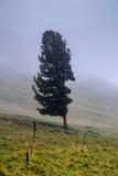Nebeliger Tag in den Altai-Bergen, Russland Lizenzfreies Stockbild