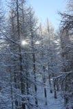 Nebeliger Tag in der Wintersaison: Baumaste umfasst mit Schnee Stockfotos