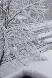 Nebeliger Tag in der Wintersaison: Baumaste umfasst mit Schnee Lizenzfreie Stockfotos