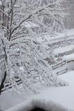 Nebeliger Tag in der Wintersaison: Baumaste umfasst mit Schnee Lizenzfreies Stockfoto