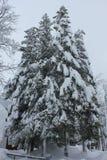 Nebeliger Tag in der Wintersaison: Baumaste umfasst mit Schnee Stockfoto