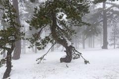 Nebeliger Tag des Winters Stockfotografie