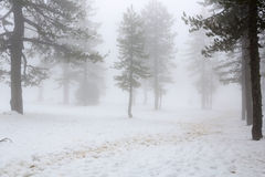 Nebeliger Tag des Winters Lizenzfreie Stockfotos