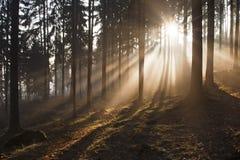Nebeliger Wald lizenzfreies stockfoto