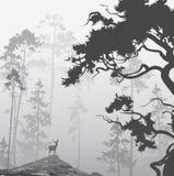 Nebeliger Wald Stockfotografie