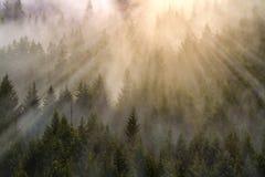 Nebeliger Wald Stockbild