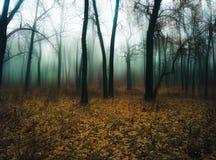 Nebeliger Wald Stockbilder