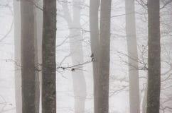 Nebeliger Wald lizenzfreies stockbild